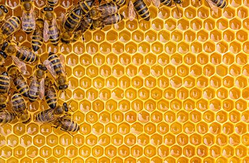 怎麼把蜂巢取下來?